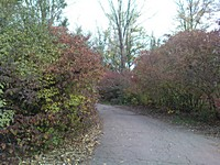 "District park near Palace of Culture ""Frunze"""